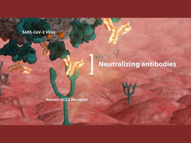 Coronavirus, antibody illustration