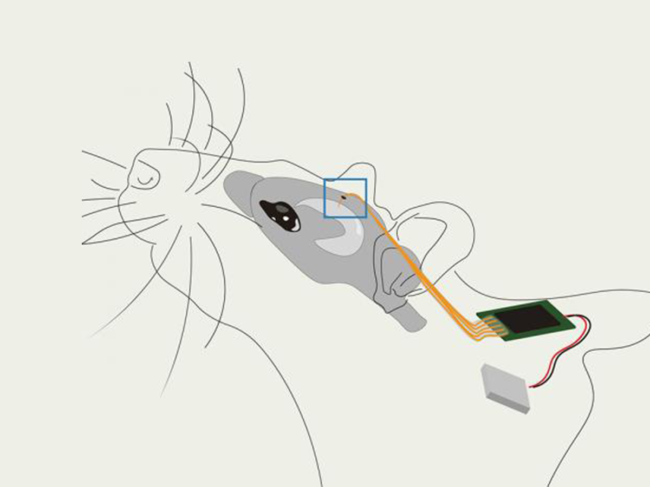 Illustration of mouse with chip implant