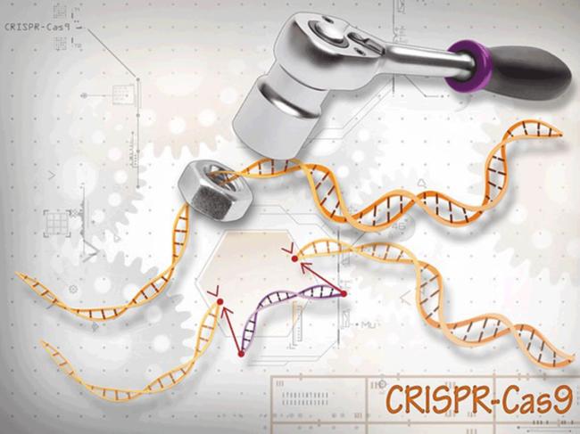 ASH-gene-editing-12-9