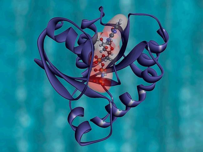 KRAS protein