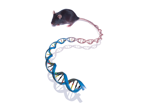 Science ena single mouse credit ucsd