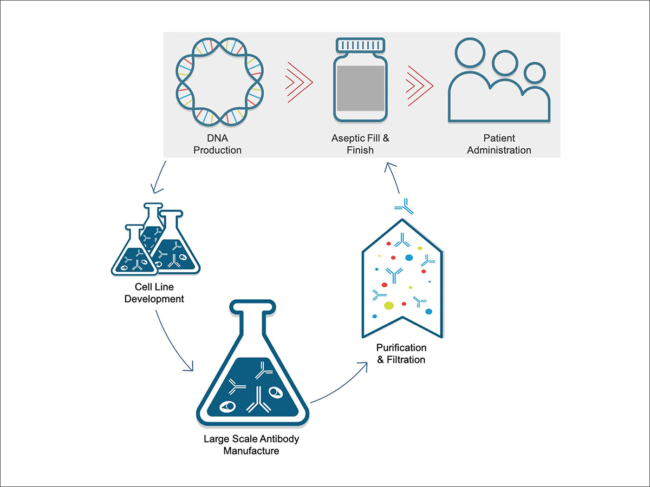 DNA-based antibody delivery graphic