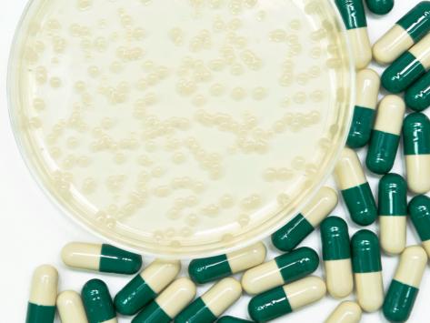 Antibiotics-petri-dish