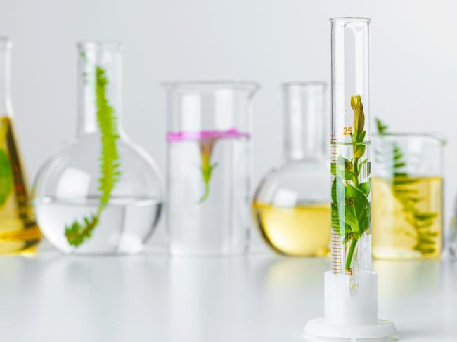 Botanical drug illustration