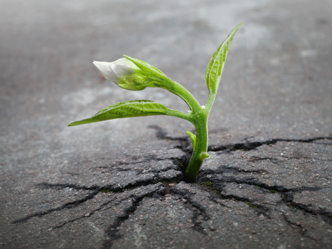 Seedling growing in cracked pavement