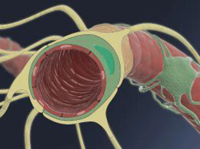 Blood-brain barrier illustration