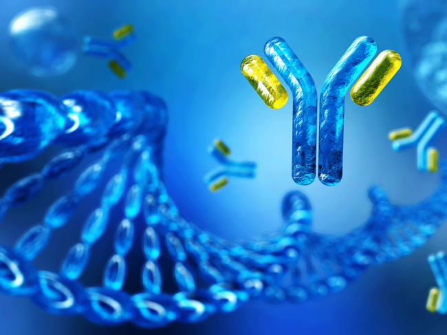 DNA and antibodies