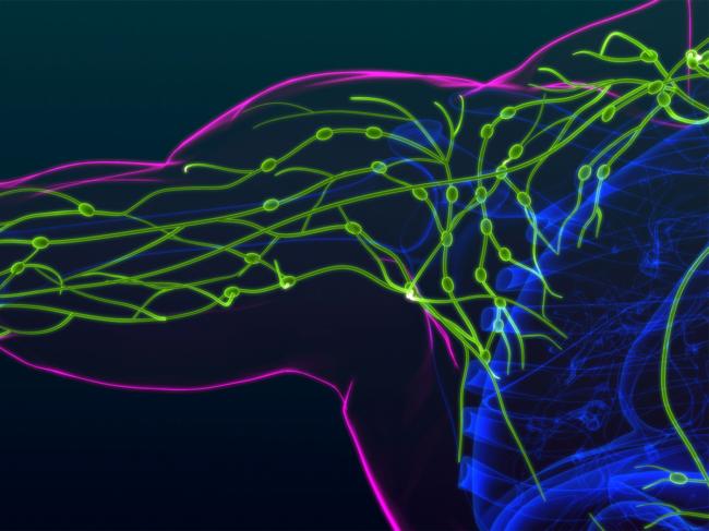 Lymph nodes