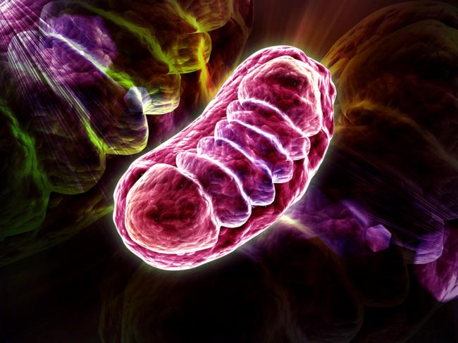 Mitochondria illustration