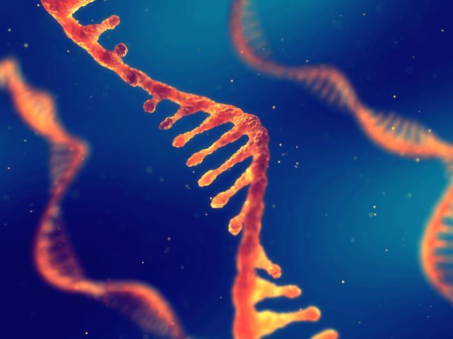 Single strand RNA