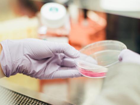 Biotech drug development
