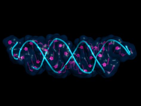 siRNA bound to mRNA