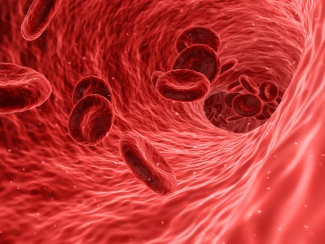 Red blood cells, artery