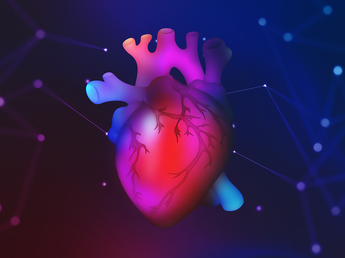 Colorful illustration of the heart
