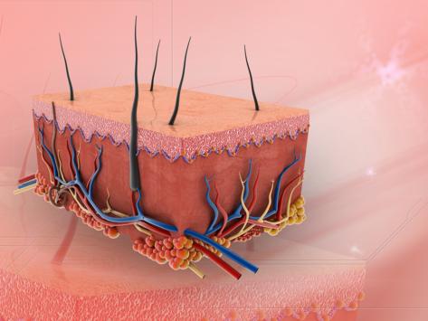 Dermatologic skin layer regenerative