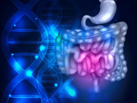 Illustration of DNA, digestive system