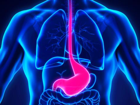 Gastric anatomy