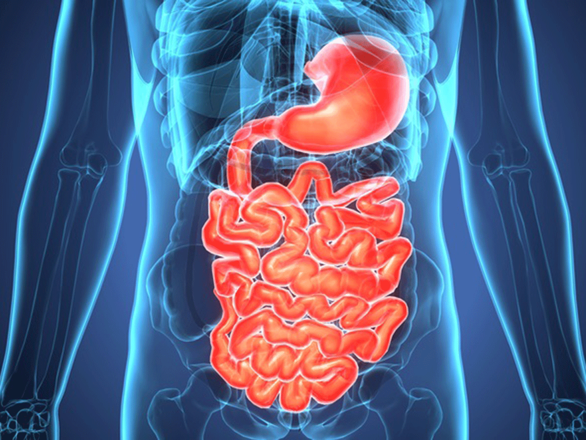 Stomach and intestine