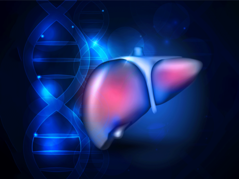 Liver and DNA