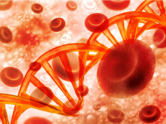 Red blood cells, DNA