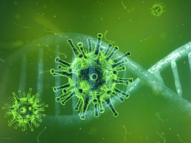 Coronavirus and DNA