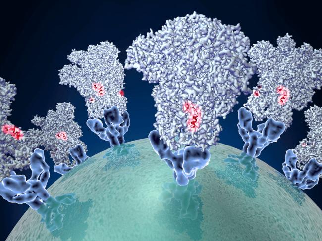 Coronavirus-viral-membrane-