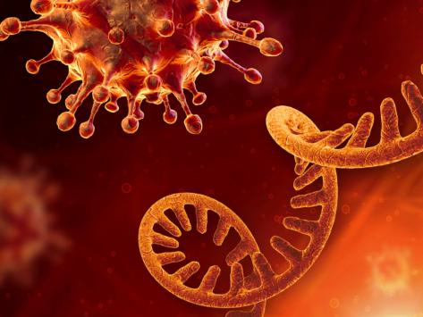 Rna and sars cov 2 virus cell