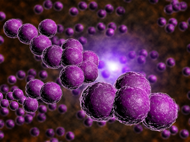 Staphylococcus-aureus-staph-bacteria-infection.png