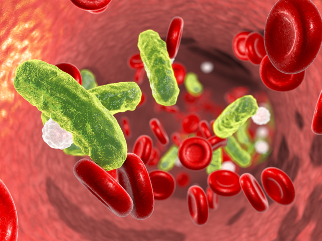 Blood cells and bacteria