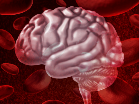 Brain and blood cells