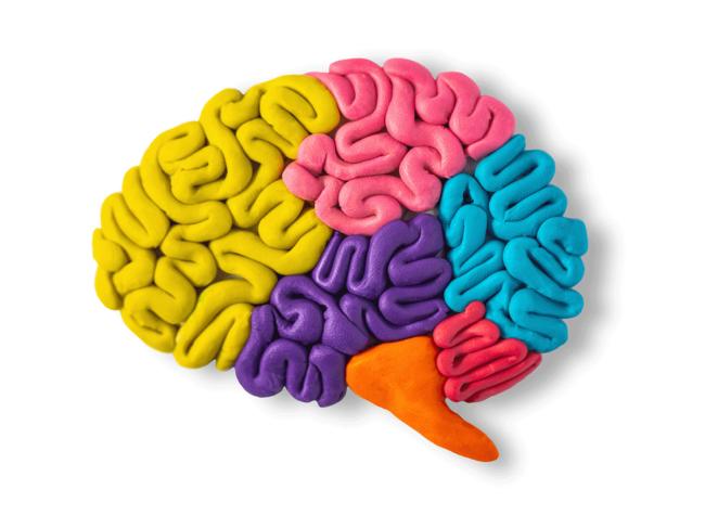 Brain clay model
