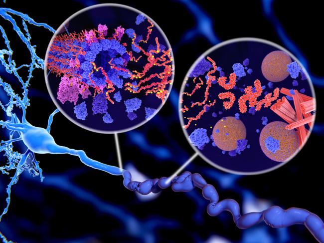 Tau protein in Alzheimer's disease