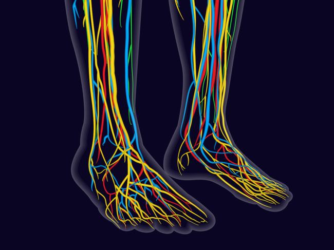 Medical illustration of human feet, nervous system, veins, arteries