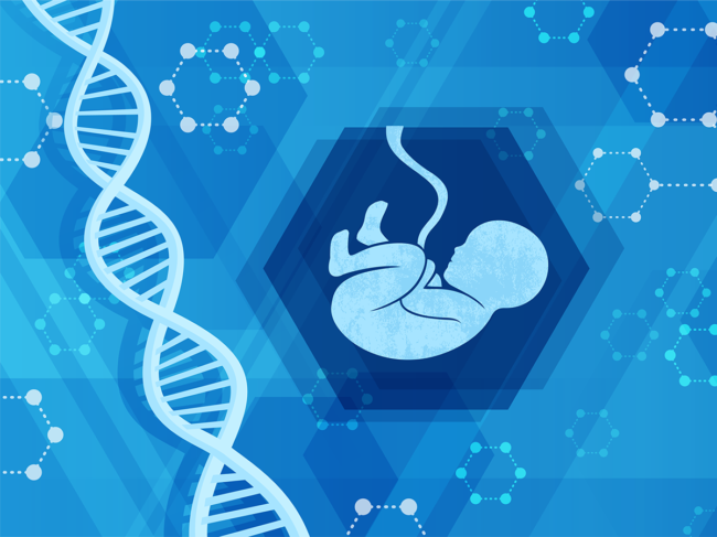 DNA, fetus illustration