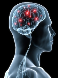 aaas-brain_regeneration_feb._20_2013.jpg