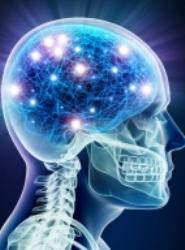 human_brain_july_14_2014.jpg